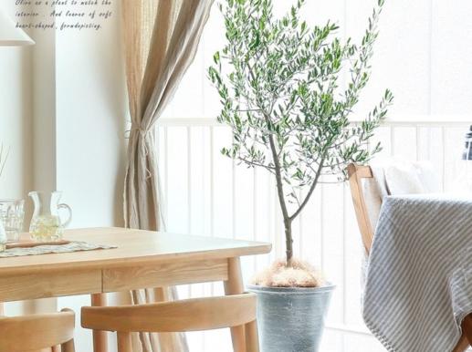 オリエンタル南堀江 1201 🈵⑮ 1LDK 西区 ○植物が育つ家